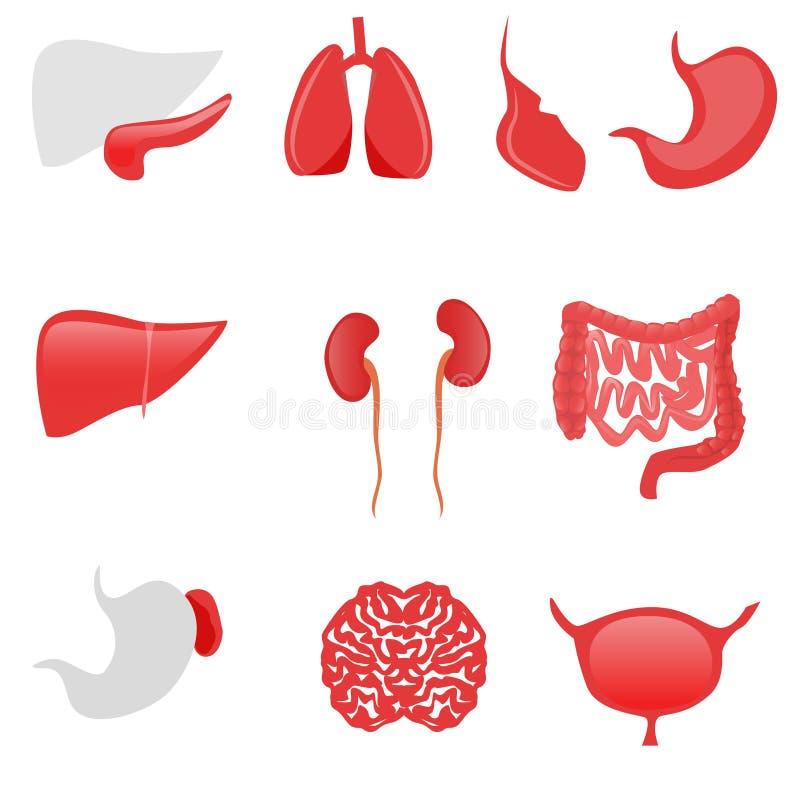 Icone degli organi umani sui precedenti bianchi illustrazione vettoriale