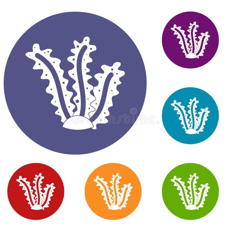 Icone dell'alga messe illustrazione di stock