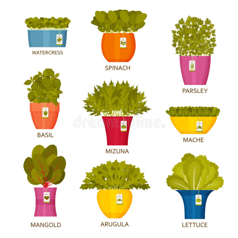 Icone di giardinaggio dell'interno con lattuga illustrazione vettoriale