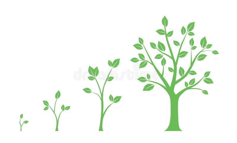 Icone verdi - fasi di crescita dell'albero su fondo bianco royalty illustrazione gratis
