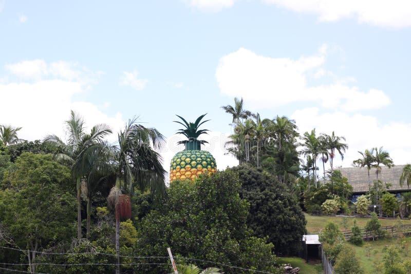 Big Pineapple in Queensland Australia stock images
