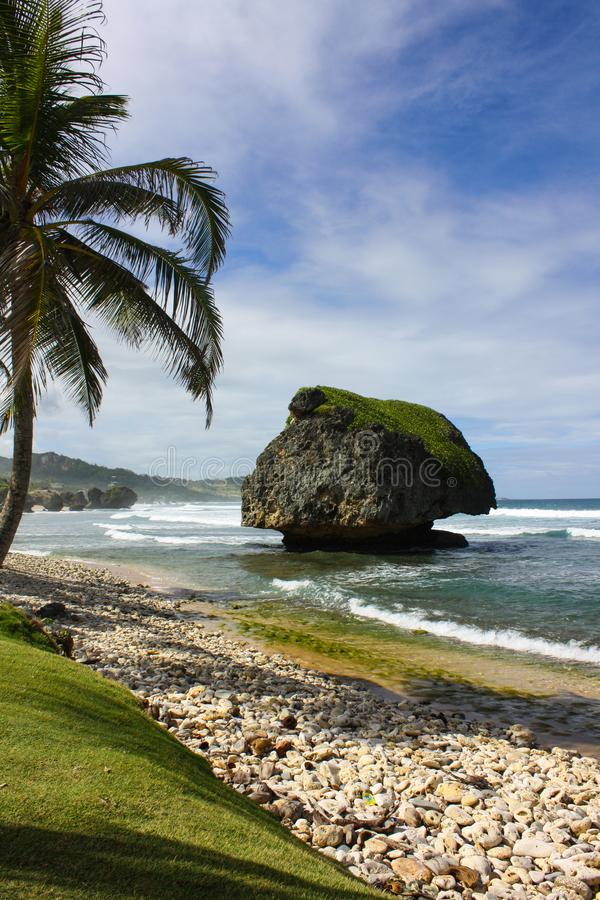 Iconic Caribbean beach view from Bathsheba beach park Barbados. royalty free stock images