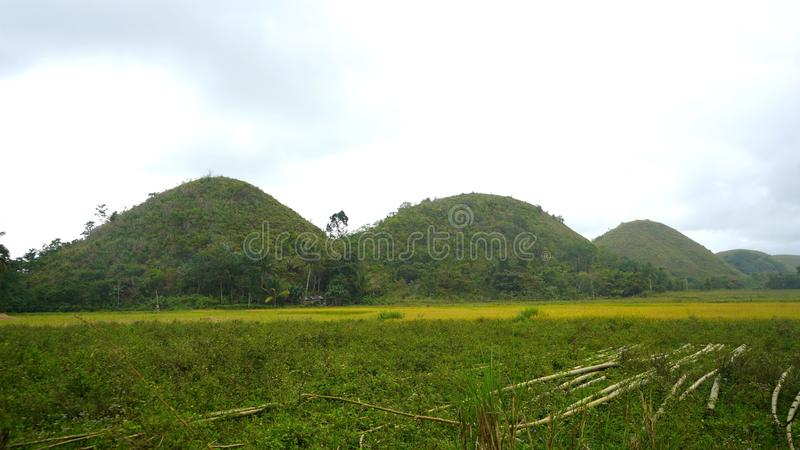 Chocolate hills, Bohol, Filipino. The iconic `chocolate hills`, undulating hills as far as the eye can see, are one of Bohol`s main sights. The hills owe their royalty free stock images