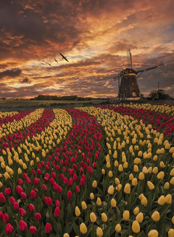 Free Iconic Dutch Landscape Sunset Stock Image - 182469051