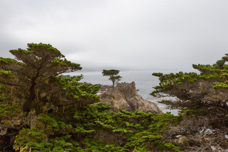 Lone Cypress at Monterey. The iconic lone cypress tree on the scenic 17-mile drive in Monterey, California stock photo