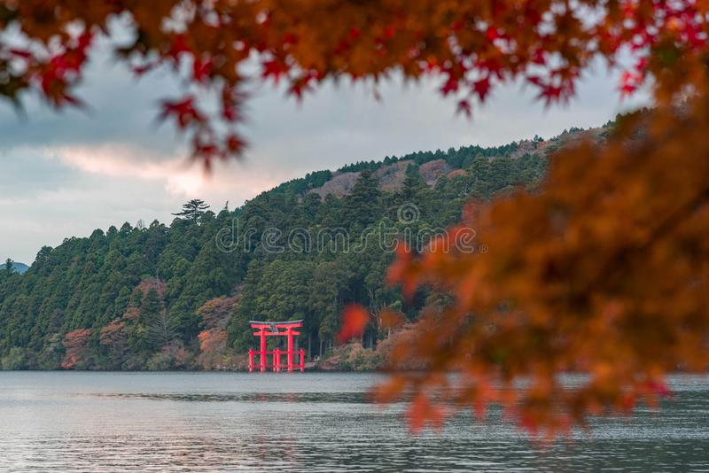 An iconic red gate of Hakone jinja shrine standing in Lake Ashi with blurred red maple leaves. In foreground stock photos