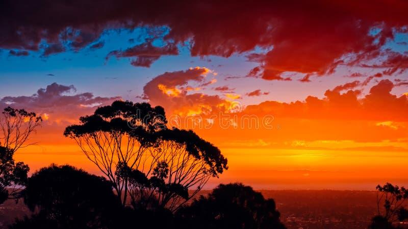 Iconic södra australisk solnedgång till och med gumtrees royaltyfri fotografi