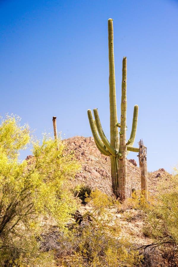 Iconic Southwest Scene Stock Photo  Image Of Conservation