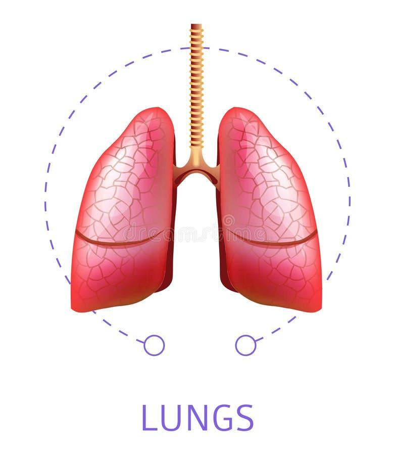 Icono aislado órgano interno humano del sistema respiratorio de los pulmones stock de ilustración