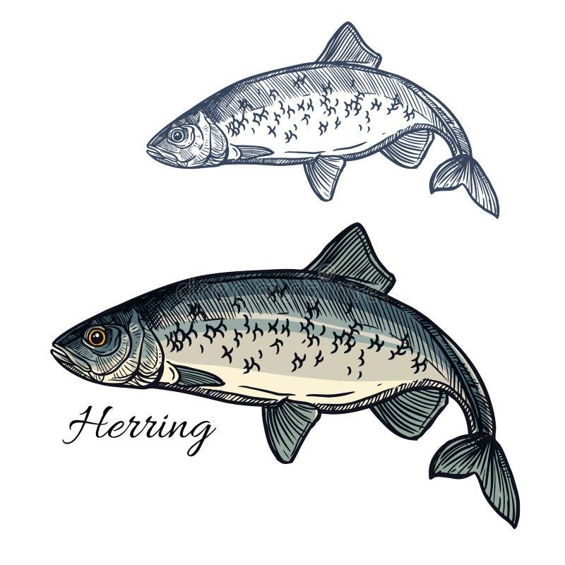 Icono aislado vector del bosquejo de los pescados de los arenques ilustración del vector