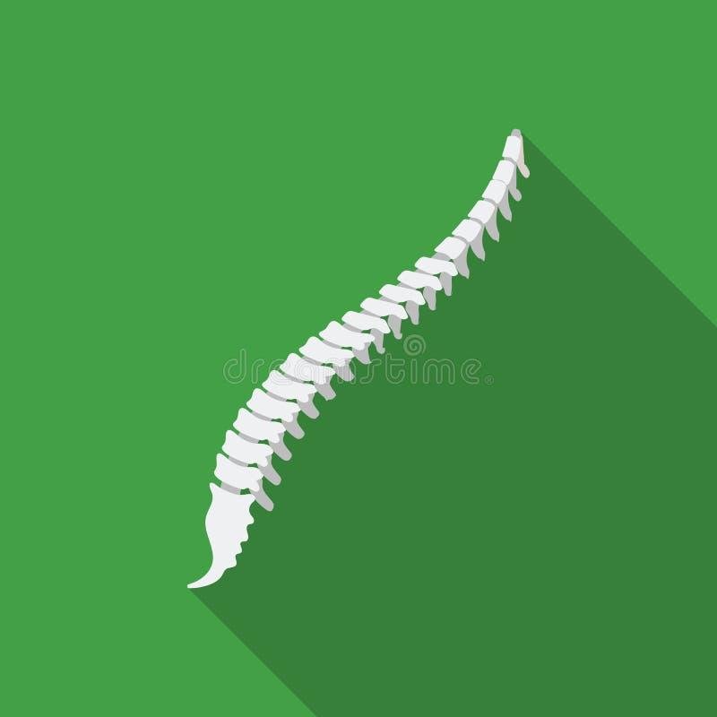 Icono de la espina dorsal en estilo plano aislado en el fondo blanco Ejemplo del vector de la acción del símbolo de los órganos libre illustration