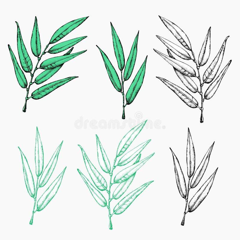 Icono de la guirnalda del laurel Emblema hecho de ramas del laurel El laurel sale del s?mbolo de las plantas verdes olivas de alt libre illustration