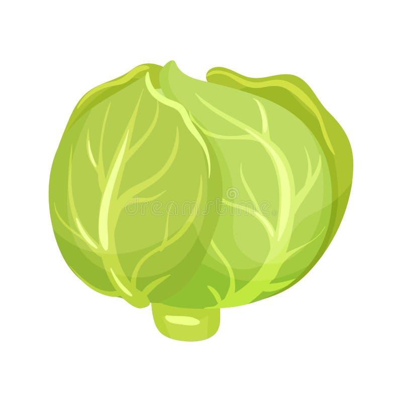 Icono de la historieta de la col verde alimento fresco de vegetable Producto agrícola natural Comida orgánica y sana Ingrediente  ilustración del vector