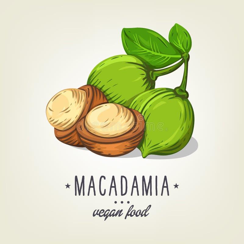 Icono de la macadamia del vector aislado en fondo Nueces realistas del color con las hojas y las semillas stock de ilustración