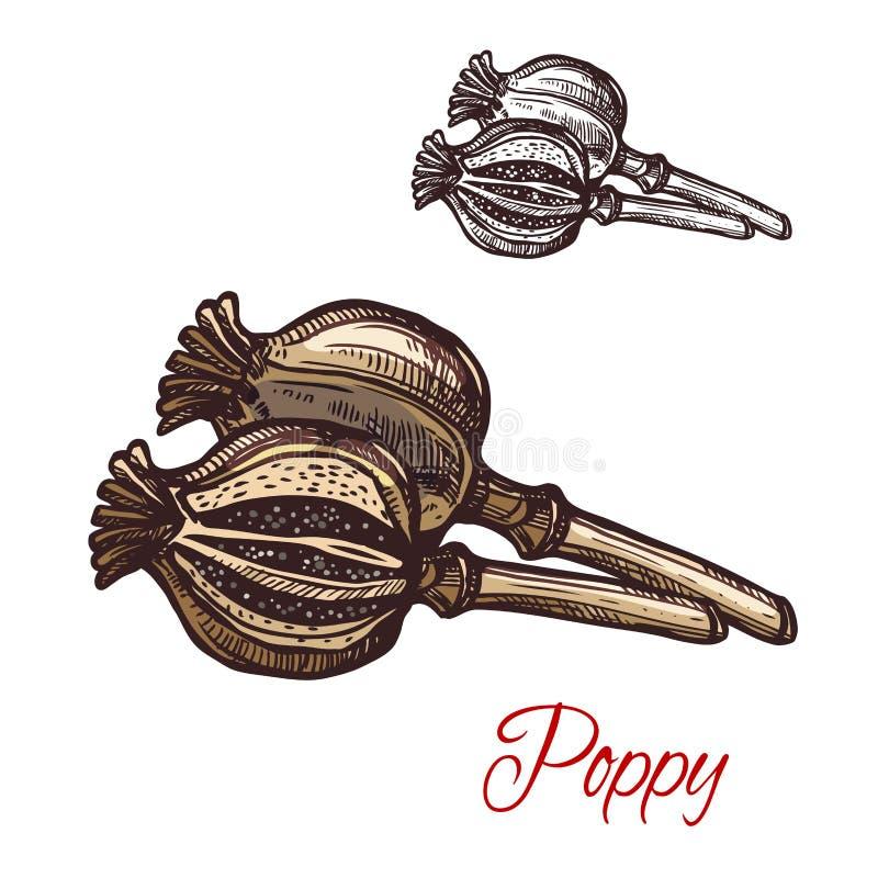 Icono de la planta del bosquejo del vector de la planta del condimento de la vaina de la amapola stock de ilustración