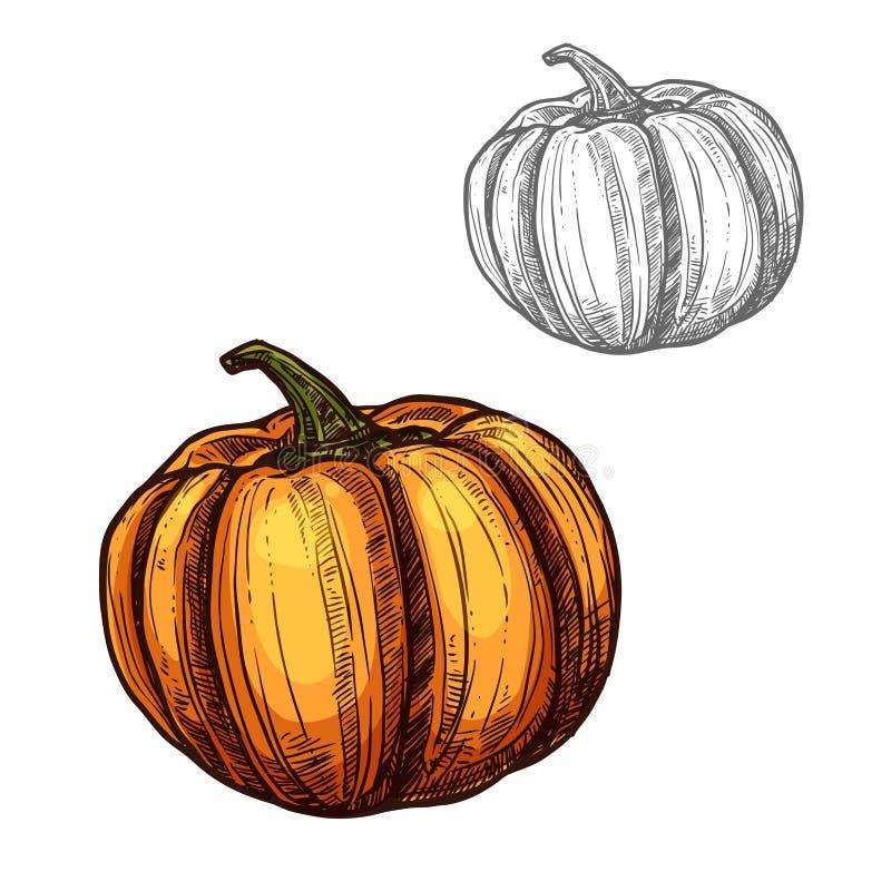 Icono de la verdura del bosquejo del vector de la calabaza libre illustration