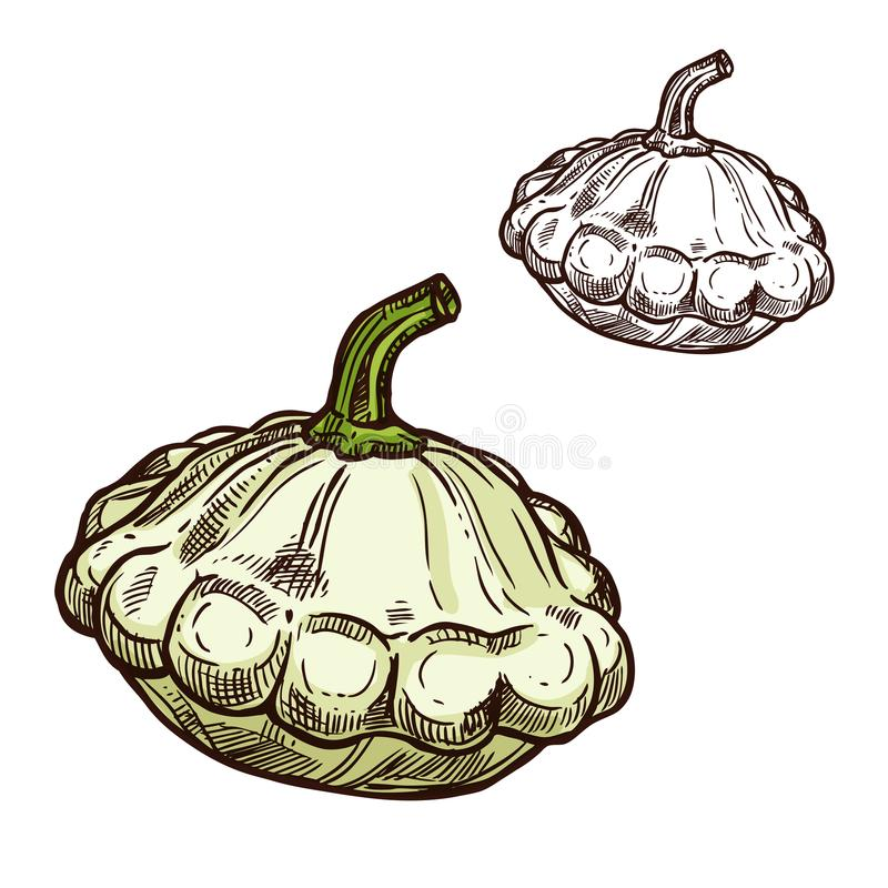 Icono de la verdura del bosquejo del vector de la calabaza de Pattypan libre illustration
