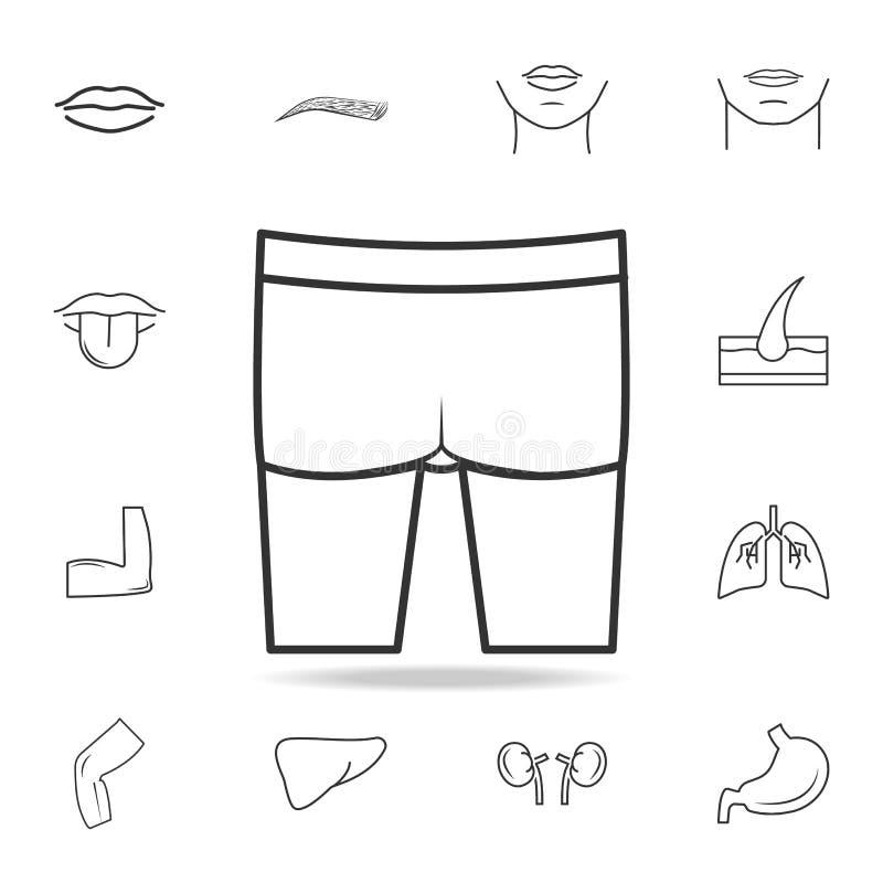 Icono de las nalgas Sistema detallado de iconos humanos de la parte del cuerpo Diseño gráfico de la calidad superior Uno de los i stock de ilustración