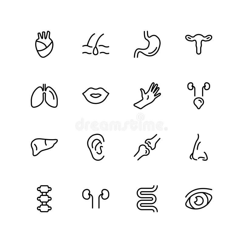 Icono del órgano humano stock de ilustración