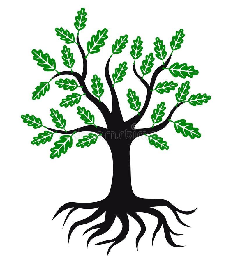 Icono del roble con las hojas y las raíces del verde stock de ilustración