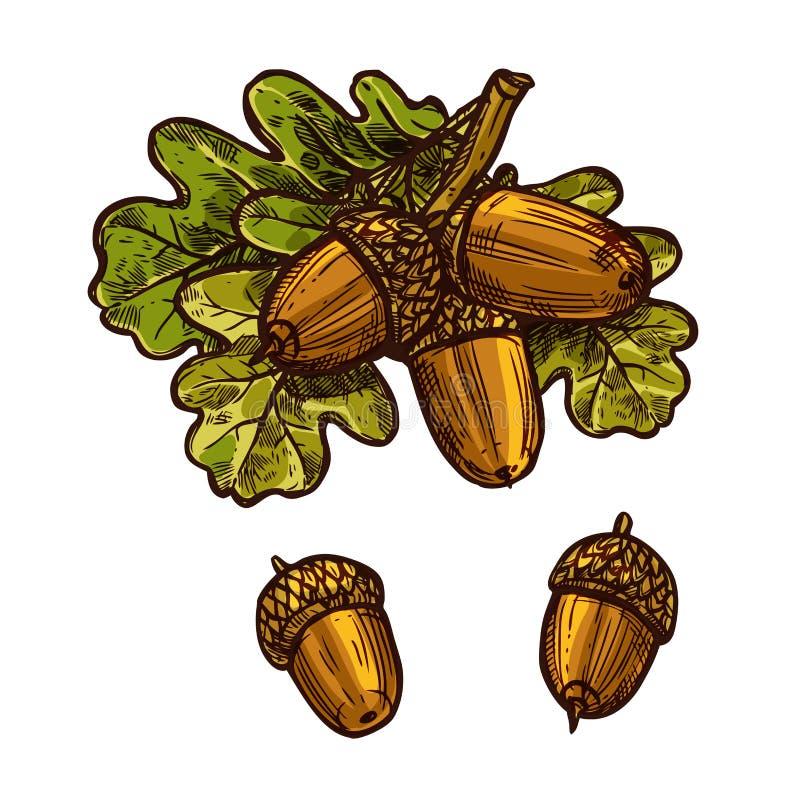Icono del vector del bosquejo del día de la acción de gracias de la bellota de la hoja del roble stock de ilustración