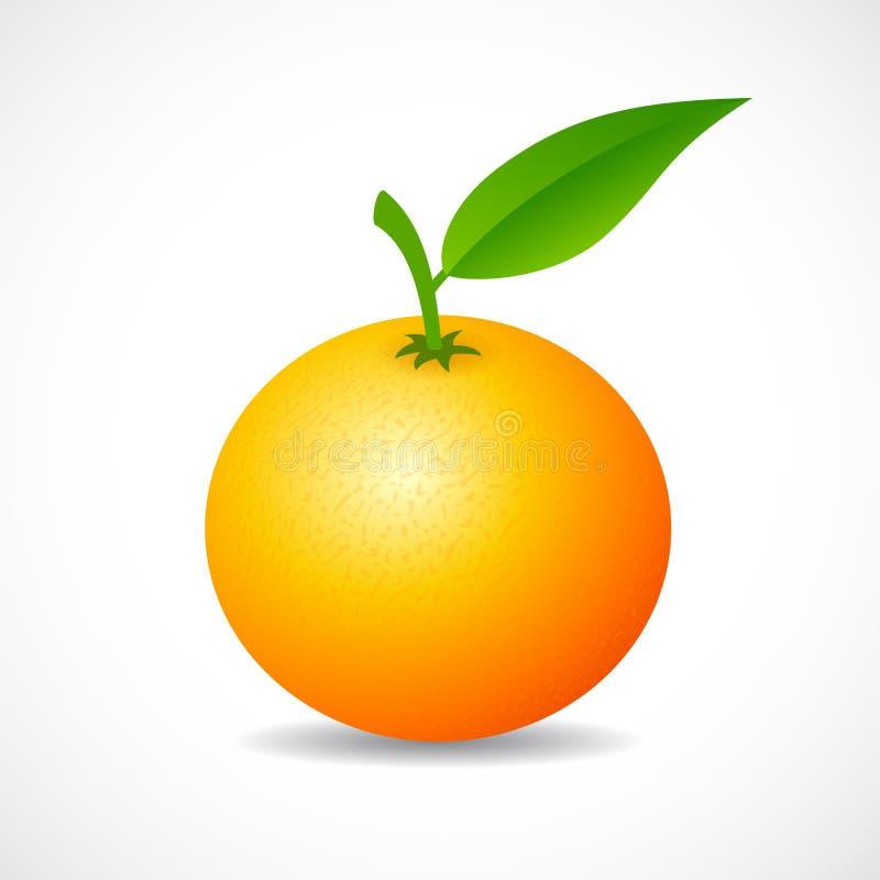 Icono del vector de la mandarina ilustración del vector