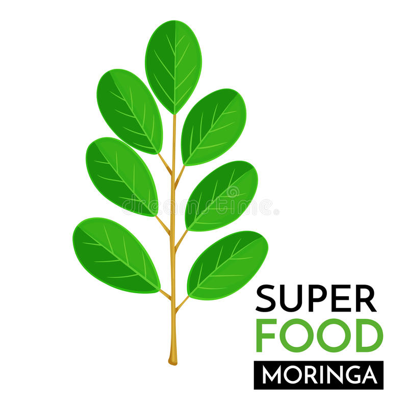 Icono del vector de Moringa stock de ilustración