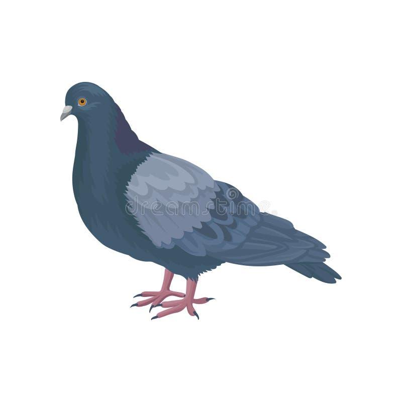 Icono detallado del vector de la paloma de la paloma Pájaro con la pequeña cabeza, las piernas cortas y las plumas azul-grises An stock de ilustración