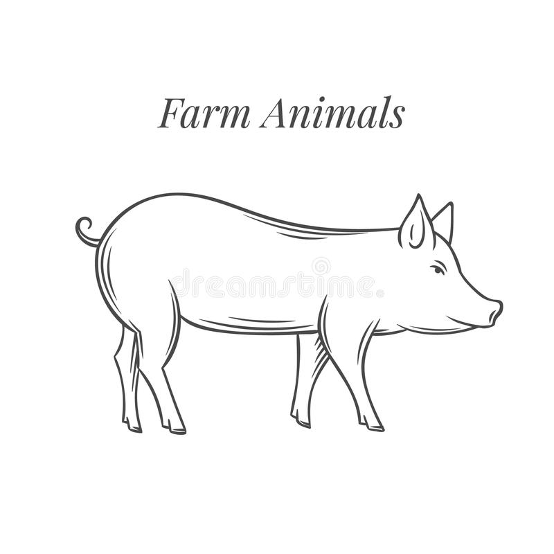 Icono dibujado mano del cerdo ilustración del vector