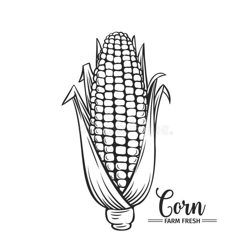 Icono dibujado mano del maíz ilustración del vector