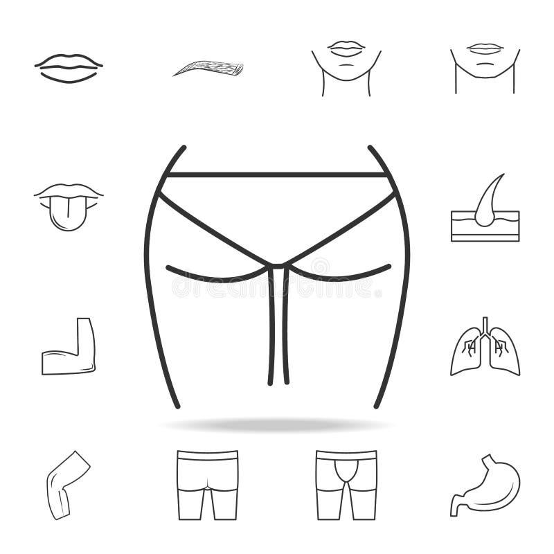 Icono femenino de las nalgas Sistema detallado de iconos humanos de la parte del cuerpo Diseño gráfico de la calidad superior Uno ilustración del vector