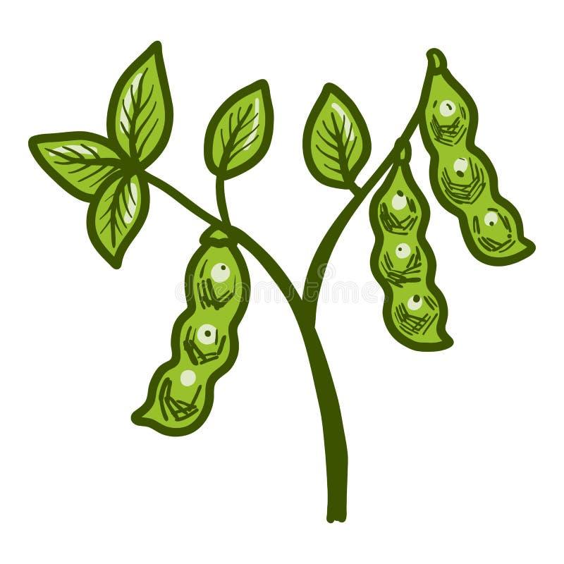 Icono grande de la planta de soja, estilo exhausto de la mano libre illustration