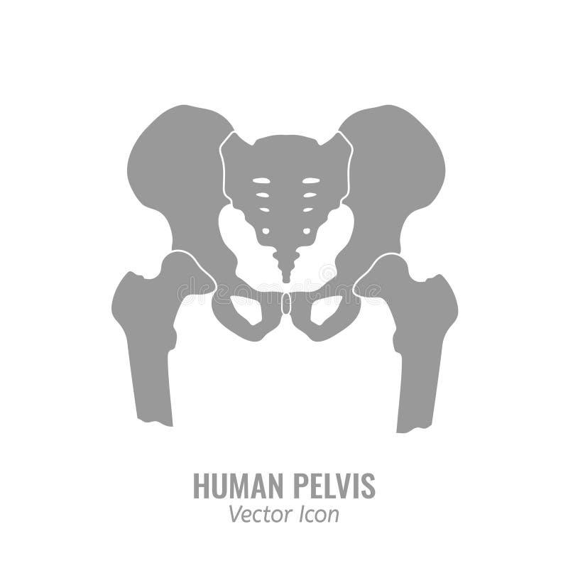 Icono humano de la pelvis libre illustration