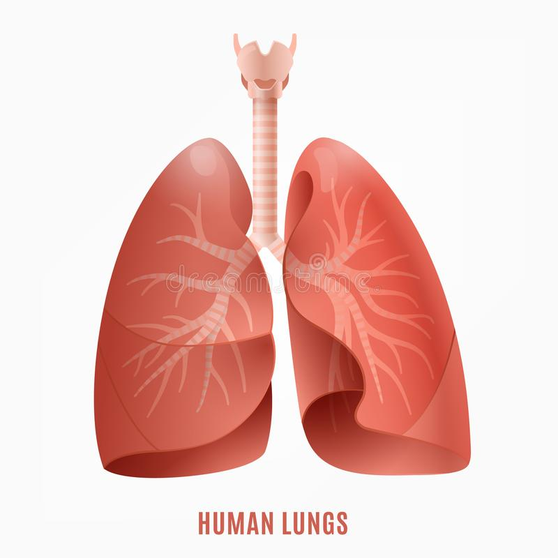 Icono humano de los pulmones stock de ilustración