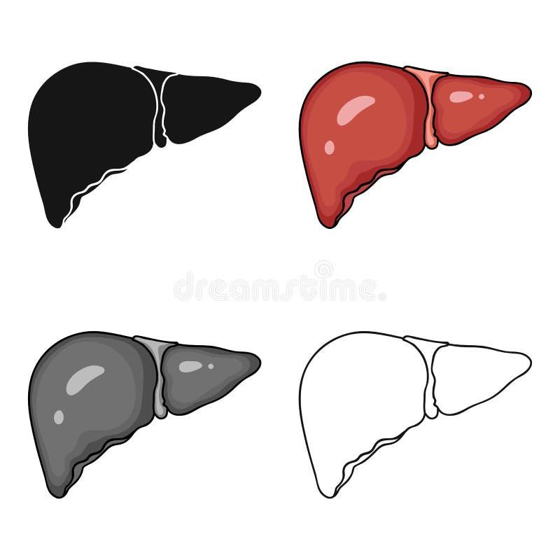 Icono humano del hígado en estilo de la historieta aislado en el fondo blanco Ejemplo del vector de la acción del símbolo de los  stock de ilustración