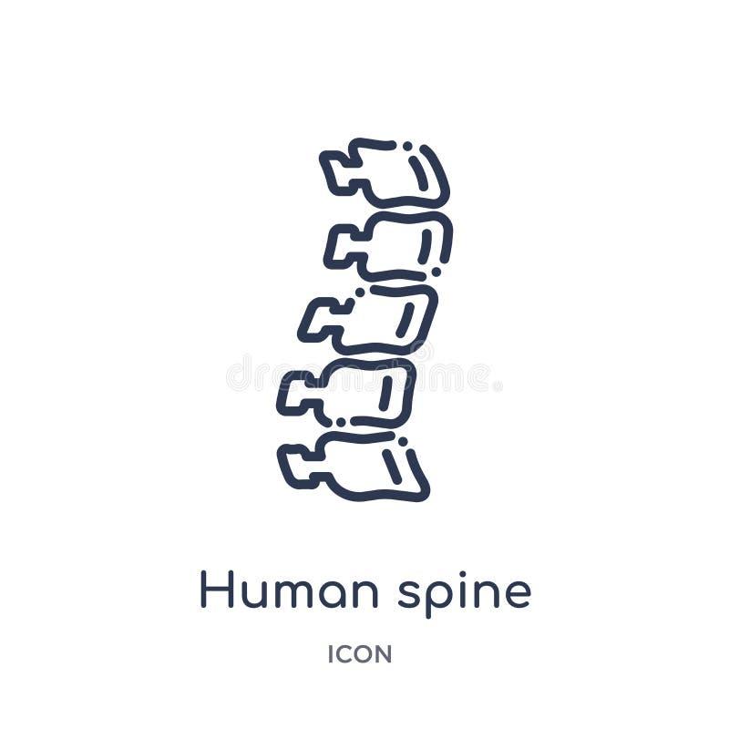 Icono humano linear de la espina dorsal de la colección humana del esquema de las partes del cuerpo Línea fina icono humano de la libre illustration