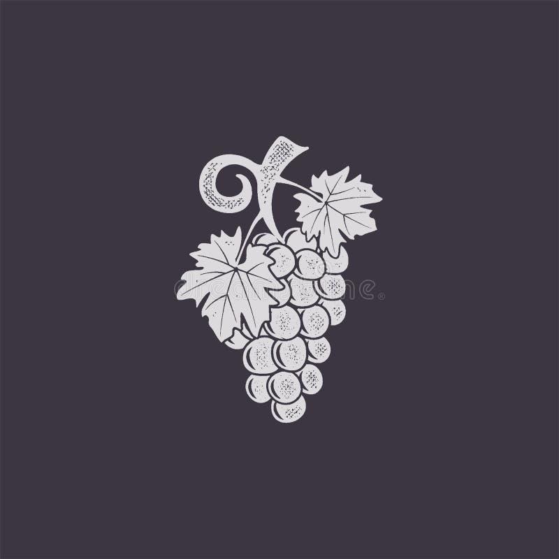 Icono jand-dibujado vintage de la uva Diseño retro Símbolo de Friut para el logotipo, la etiqueta o la insignia Ejemplo común del stock de ilustración