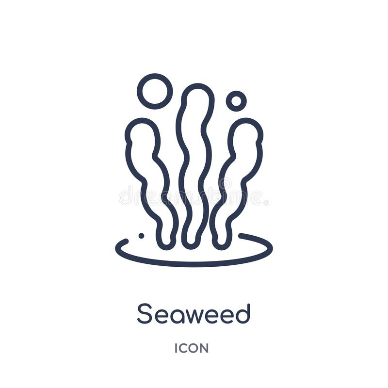 Icono linear de la alga marina de la colección del esquema de los animales Línea fina icono de la alga marina aislado en el fondo libre illustration