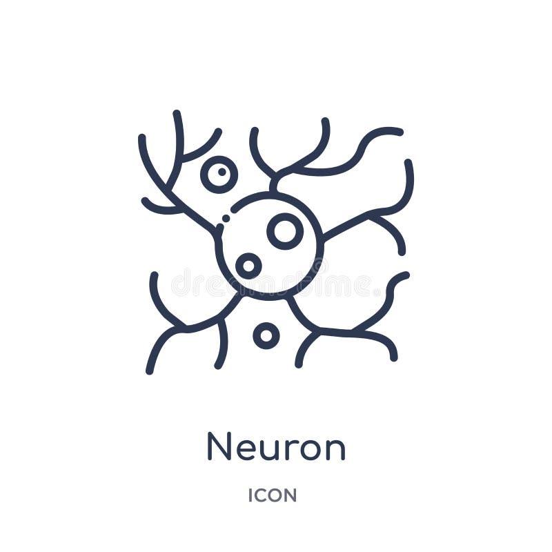 Icono linear de la neurona de la colección humana del esquema de las partes del cuerpo Línea fina icono de la neurona aislado en  stock de ilustración