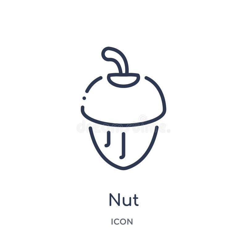 Icono linear de la nuez de la colección del esquema de la gastronomía Línea fina icono de la nuez aislado en el fondo blanco ejem ilustración del vector