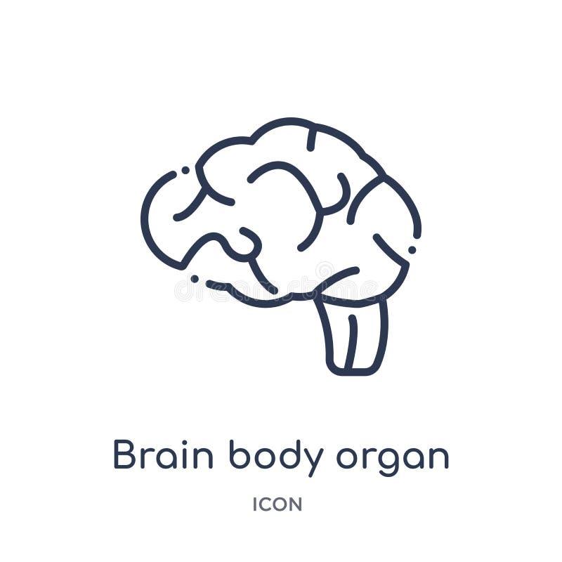 Icono linear del órgano del cuerpo del cerebro de la colección humana del esquema de las partes del cuerpo Línea fina icono del ó stock de ilustración