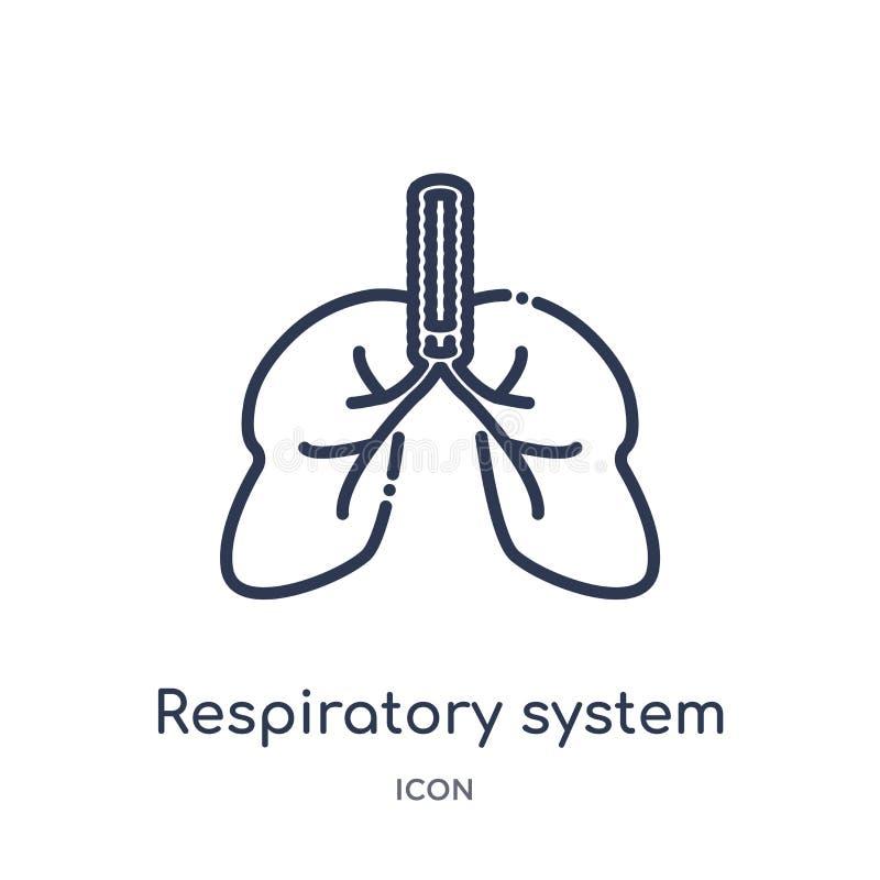 Icono linear del sistema respiratorio de la colección humana del esquema de las partes del cuerpo Línea fina icono del sistema re stock de ilustración