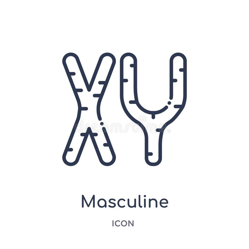 Icono masculino linear de los cromosomas de la colección humana del esquema de las partes del cuerpo Línea fina icono masculino d ilustración del vector