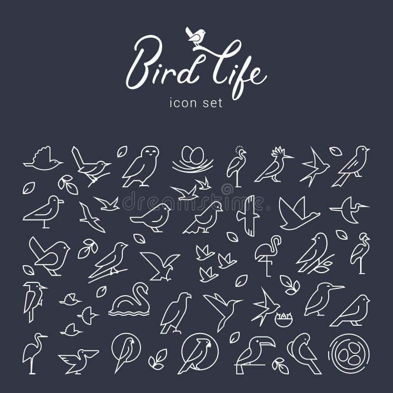 Icono plano de los pájaros del vector fijado en la línea estilo fina Logotipo minimalistic simple del pájaro Icono de los pájaros stock de ilustración