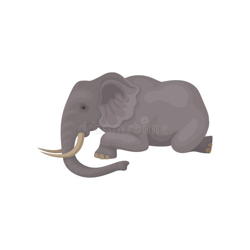 Icono plano del vector de la mentira gris grande del elefante aislado en el fondo blanco Animal salvaje con los oídos grandes, el ilustración del vector