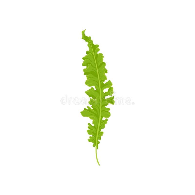 Icono plano del vector del helecho de la jerarquía del pájaro s Hoja verde clara Planta salvaje del bosque Tema de la naturaleza libre illustration