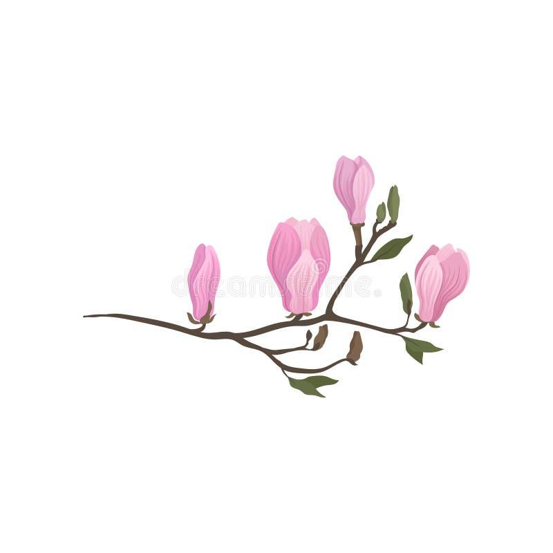 Icono plano detallado del vector de la rama de florecimiento de la magnolia Ramita con las pequeñas flores rosadas Tema de la nat stock de ilustración