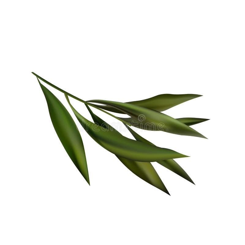 Icono realista de la rama del árbol del té Objeto aislado en el fondo blanco stock de ilustración