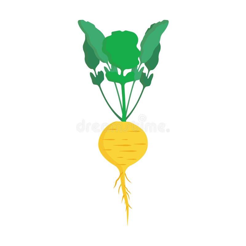Icono vegetariano sano amarillo del vector de las verduras del nabo Granja cruda de la cosecha de la hoja de la ensalada que coci libre illustration
