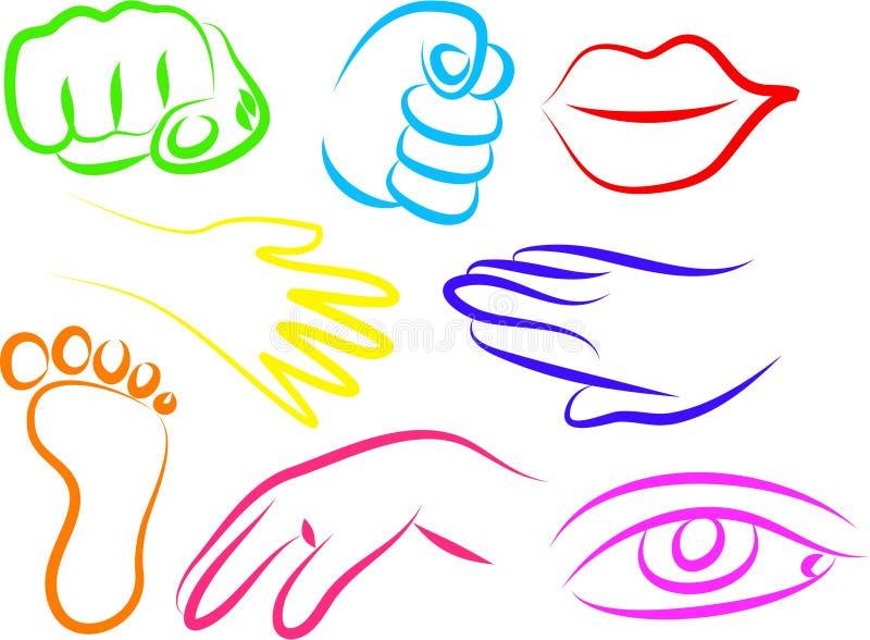 Iconos de la anatomía ilustración del vector